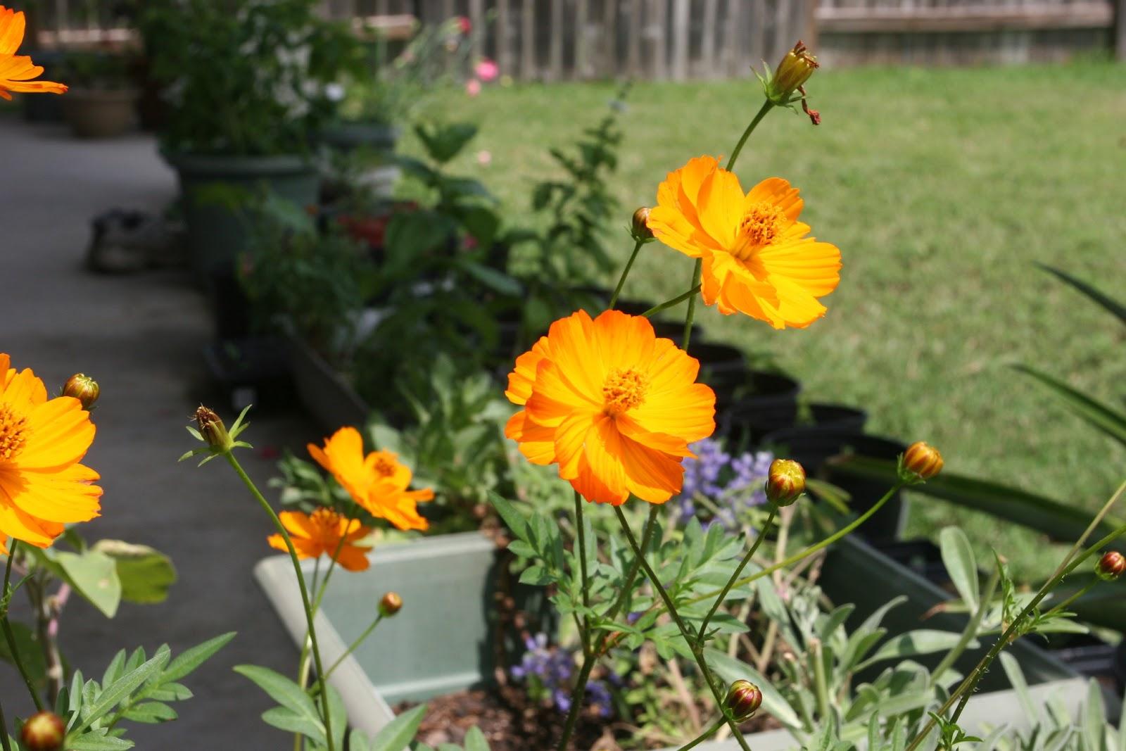Gardening 2012 - IMG_3785.JPG