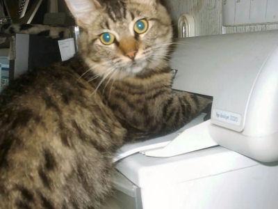 El zorro protector la importancia de un gato en la casa - El gato en casa ...