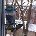 Кормушки для птичек 011.jpg