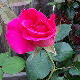 Gardening 2012 - 115_1314.JPG
