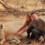 Zambia Lion Encounter
