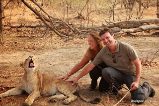 Zambia Lion Encounter