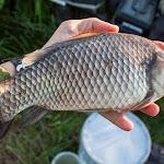 20160611_Fishing_Pryvitiv_028.jpg