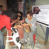 Puppy Adoption Drive & Pet Carnival