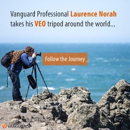 Laurence VEO Professional