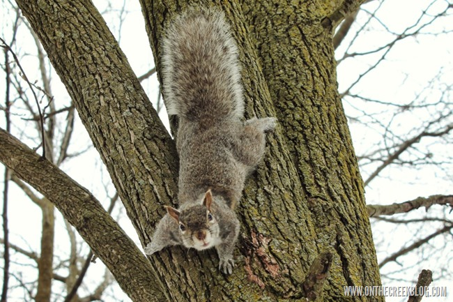 Squirrels Of Niagara Falls | On The Creek