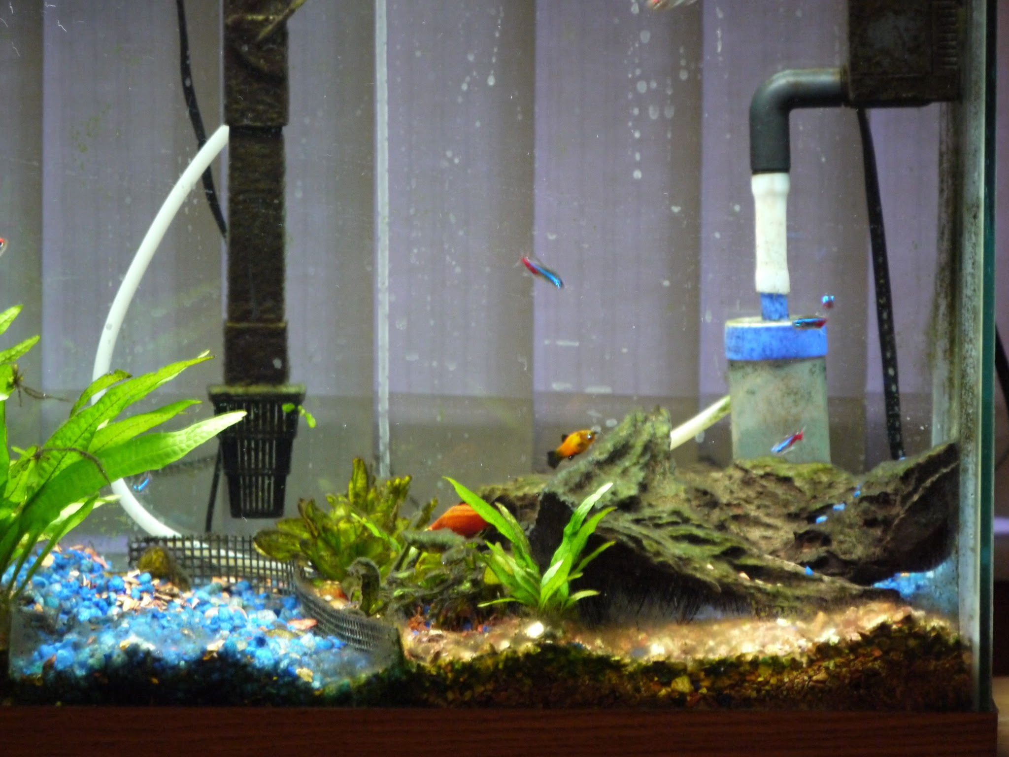 Freshwater aquarium fish keep dying - At Least The Fish Aren T Dying Meanwhile I Was Getting Great At Keeping Algae Alive There S A Reason Why Your Title Is Algae Grower When You Join