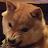 Lolcat1003 Games avatar image