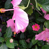 Gardening 2013 - IMG_20130526_103326.jpg