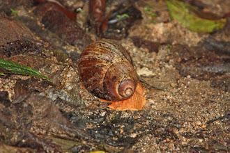 Photo: Snail