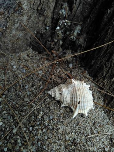 bekas cengkerang siput