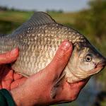 20160612_Fishing_Pryvitiv_056.jpg