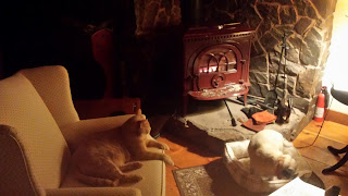 Cat sitting in chair and dog on the floor near woodstove