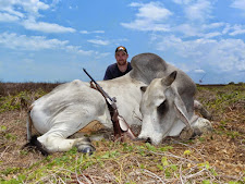 Typical Brahman scrub bull. Taken by Luke Hodges from Australia with a 9.3x74 double rifle.