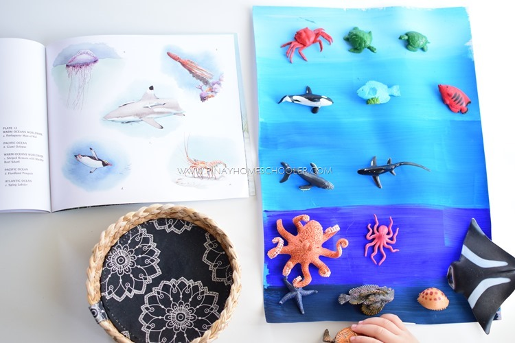 Layers of the Ocean and Animal Sorting Activity