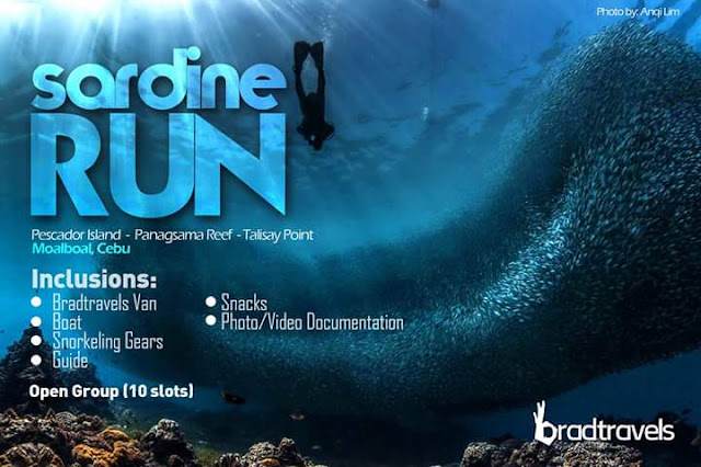 brad-travels-sardine-run
