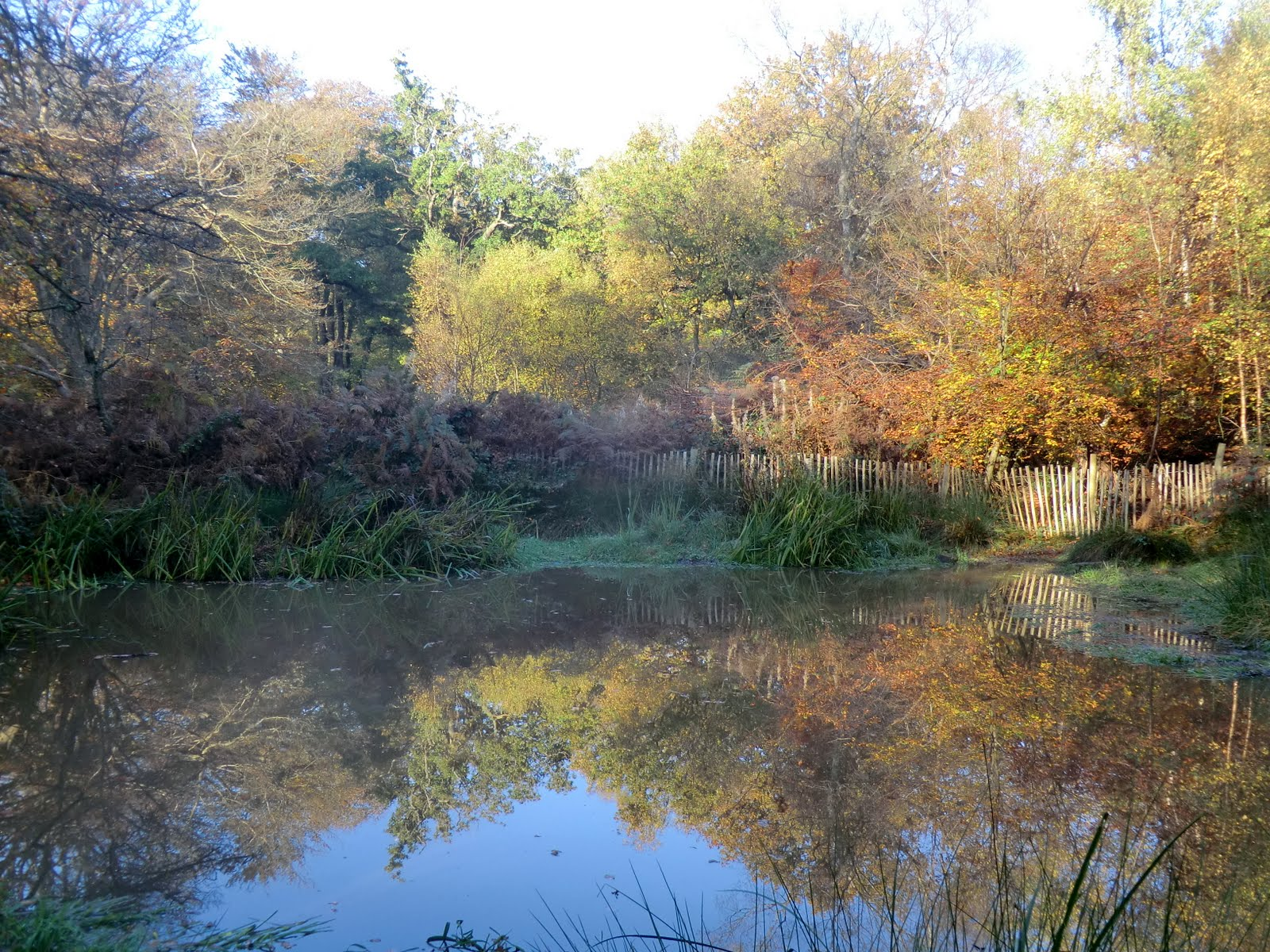 CIMG0994 Pond in autumn, Banstead Wood