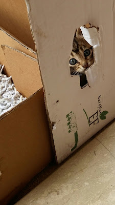 Cat Through a Box di gab.pin