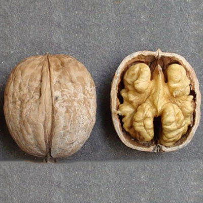 Каларашский грецкий орех