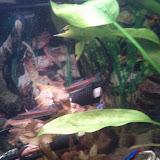 Fish - IMG_20120930_212024.jpg
