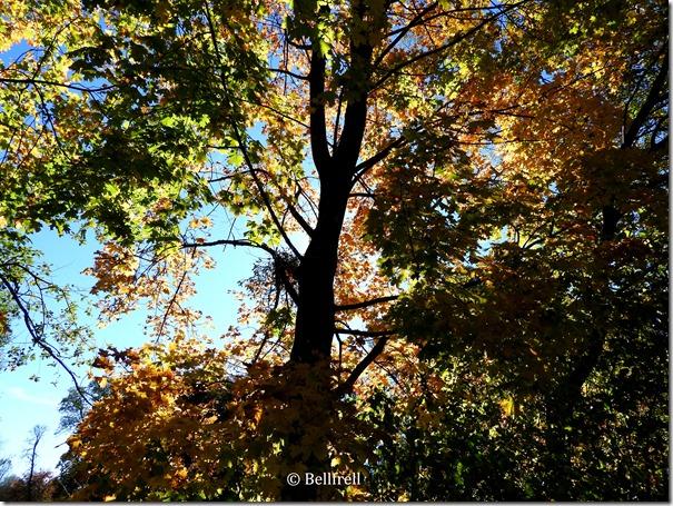 In den Baum