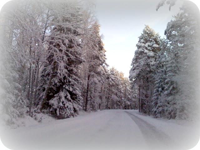 snowy Lahemaa