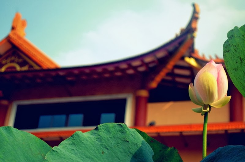 Young Lotus