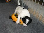 C Pups week 4