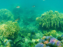 family trip pulau harapan, 1-2 agustus 2015 gopro 25