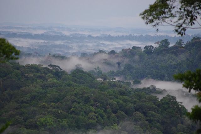 La forêt embrumée après la pluie, piste de Coralie (Guyane), 2 novembre 2012. Photo : J.-M. Gayman