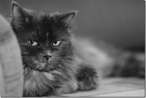 22 fotos de gats (18)