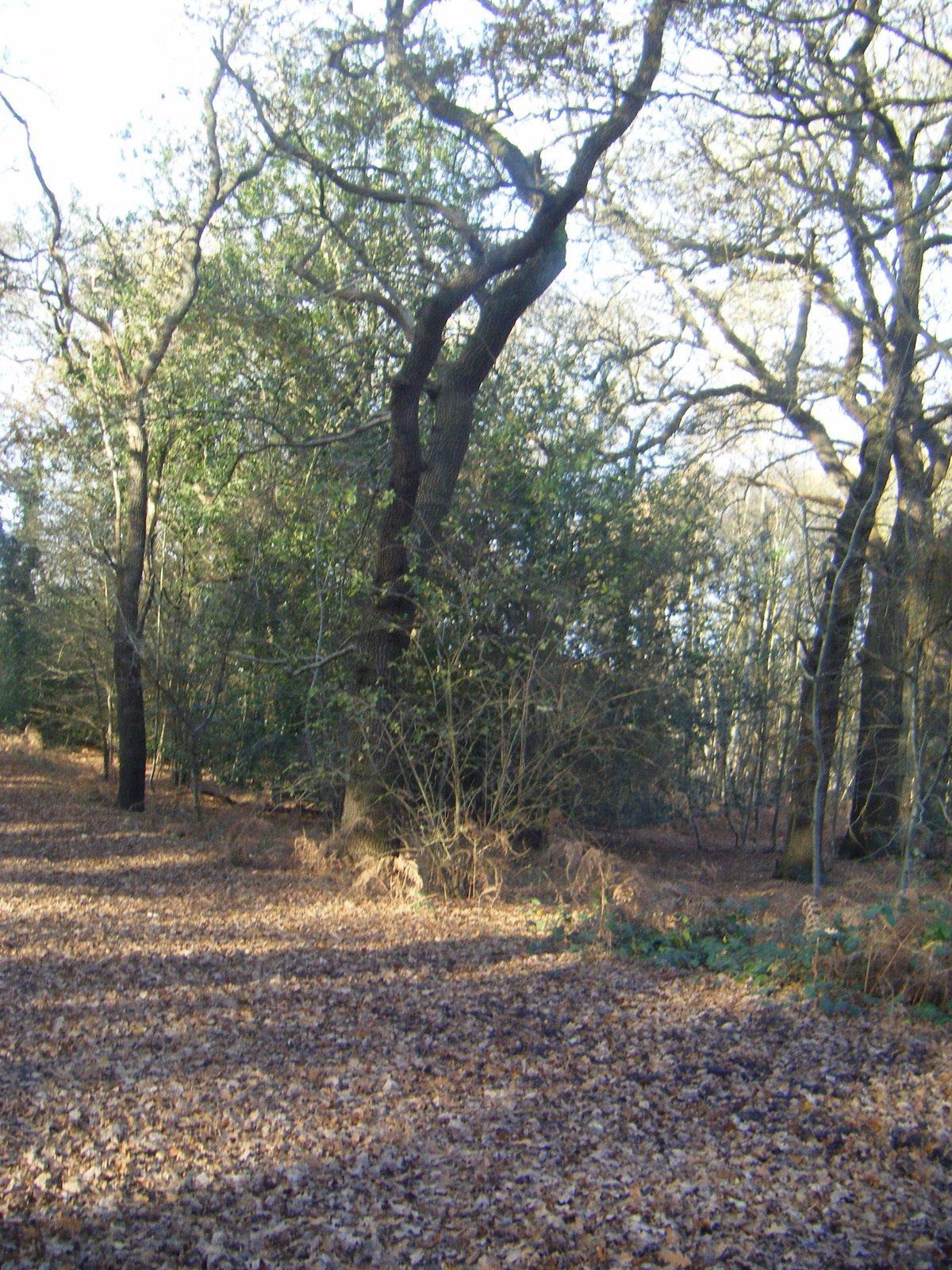 DSCF1523 Wimbledon Common Path in Autumn