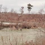 Anderson Creek Hunting Habitat - photo11.JPG