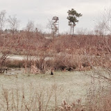 Anderson Creek Hunting Habitat - photo11.JPG