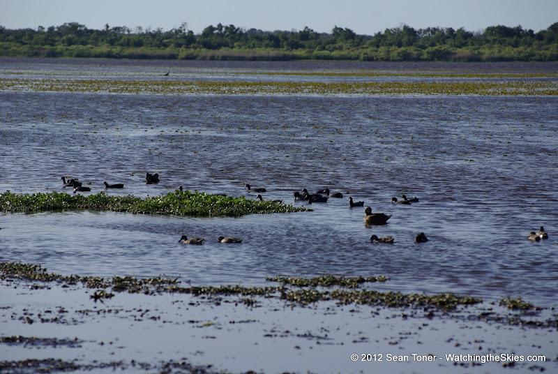 04-06-12 Myaka River State Park - IMGP4458.JPG