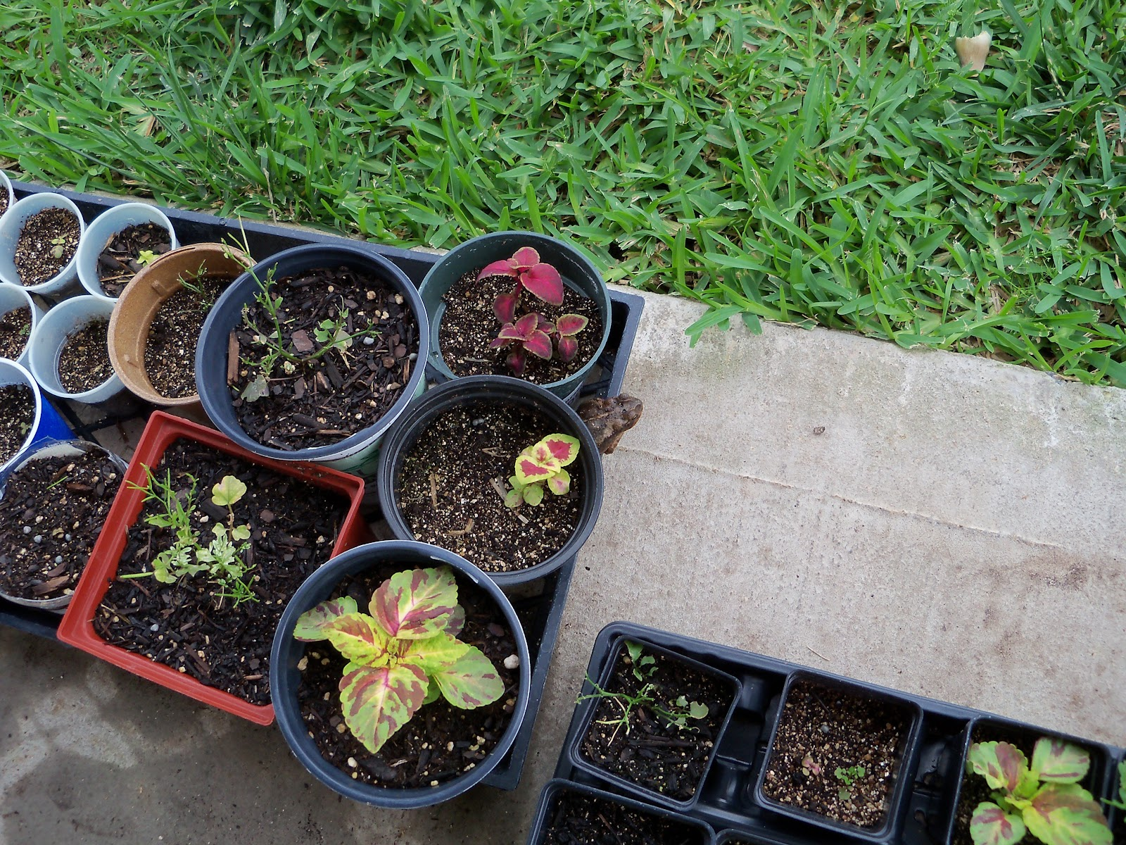 Gardening 2010, Part Two - 101_2478.JPG