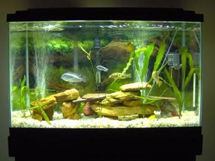 fish-tank-(42)