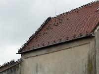 15 A templom ma kívül-belül a galambok rezidenciája.jpg