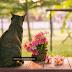 Phơi nắng cho chó mèo quan trọng như thế nào?