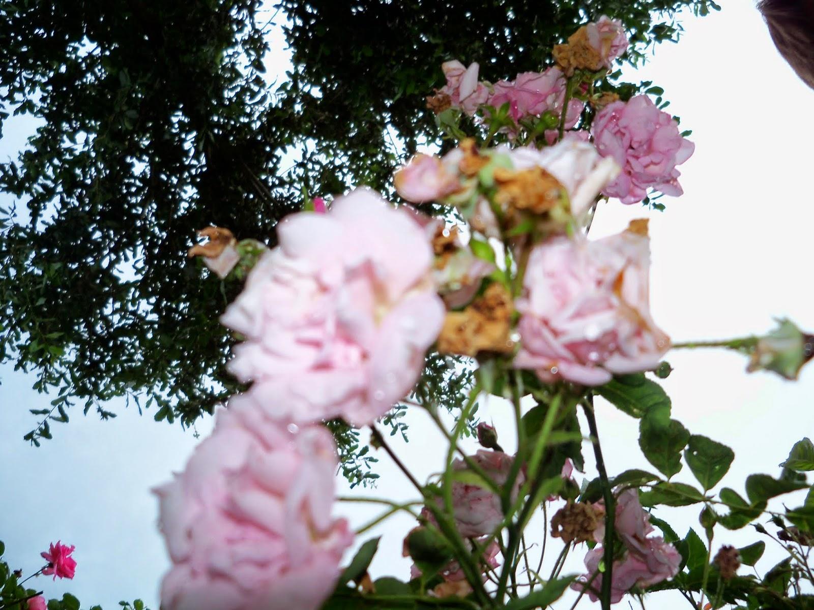 Gardening 2014 - 116_2606.JPG