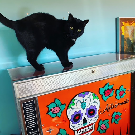The Art-o-mat Cat guards the machine at home