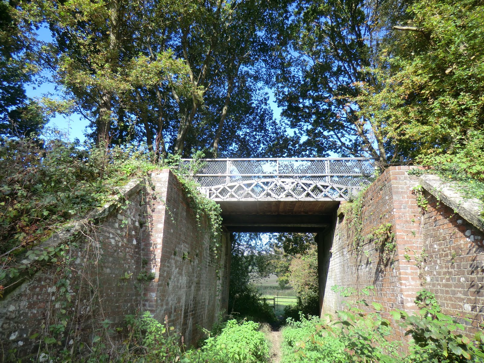 CIMG0698 Under the Forest Way