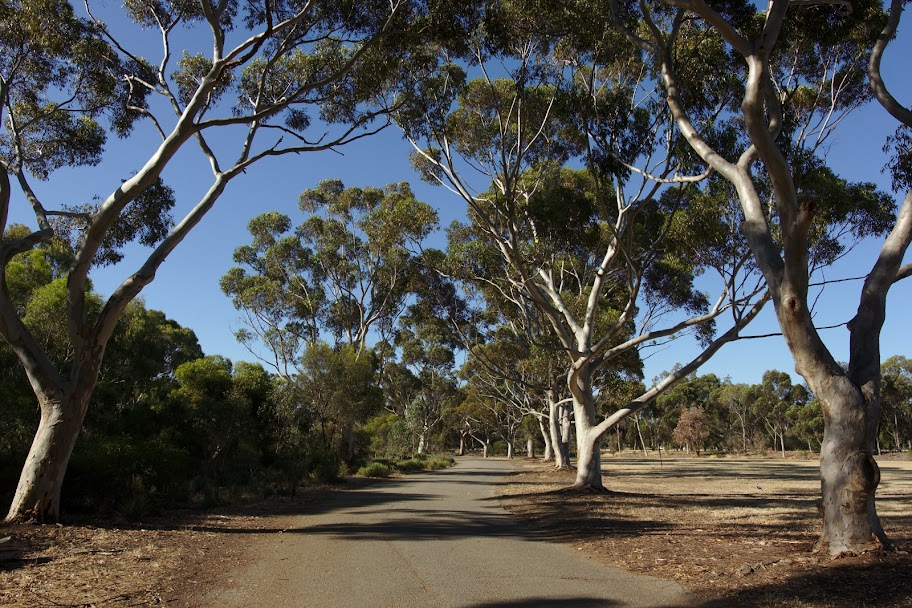 Park w Adelajdzie