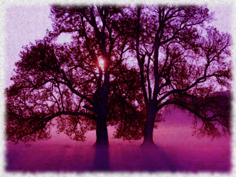 Magic Trees, Magic And Spells