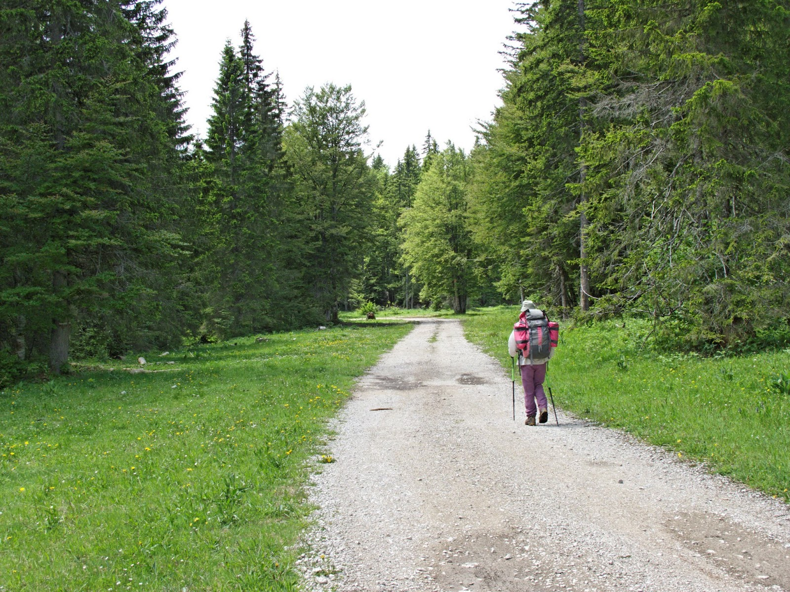 Forêt du Mont Noir