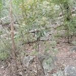 Walking beside Erskine Creek (144492)