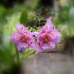 Orchideeënhoeve 2005