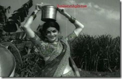 Kanchana Hot 84