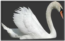 cisnes-buscoimagenes-19_thumb