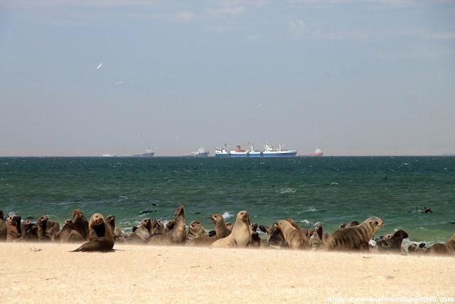 leones-marinos-pelican-point.JPG